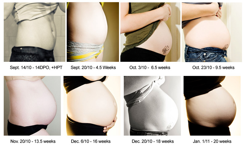 pregnant belly chart: Pregnancy belly week by week chart growth of human fetus with